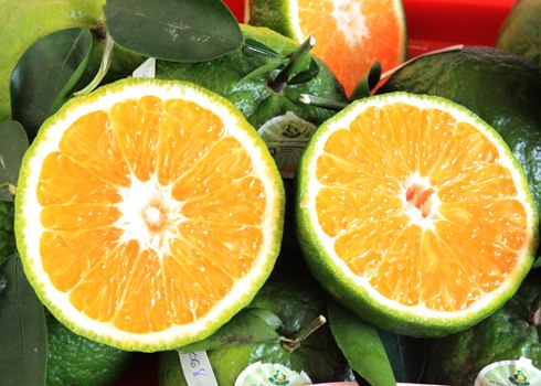 Opportunity arises for orange exports to Indonesia