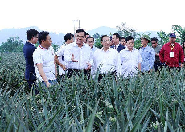Bộ trưởng Nguyễn Xuân Cường dẫn đoàn đại biểu dự Hội nghị Bộ trưởng Nông lâm nghiệp ASEAN lần thứ 40 đi thăm mô hình trồng dứa tại Ninh Bình