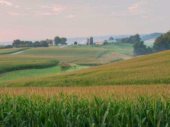 Giảm đa dạng sinh học tại trang trại có thể có tác động tiêu cực đến an toàn thực phẩm