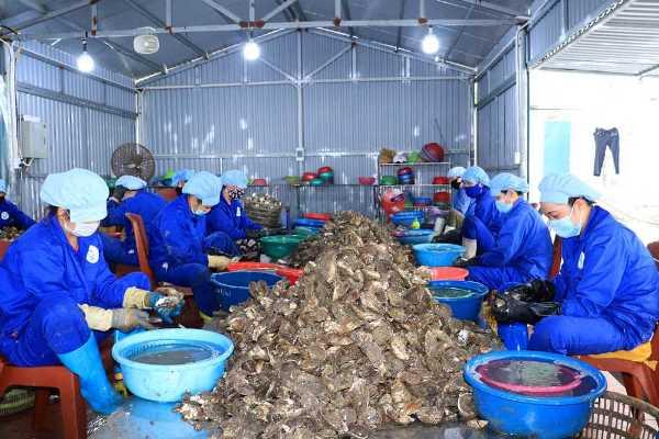 Hàu nguyên liệu được đặt trên giá inox trong quá trình chế biến tại cơ sở chế biến hộ gia đình chị Nguyễn Thị Lan Anh (thôn Cặp Tiên, xã Đông Xá, Vân Đồn).