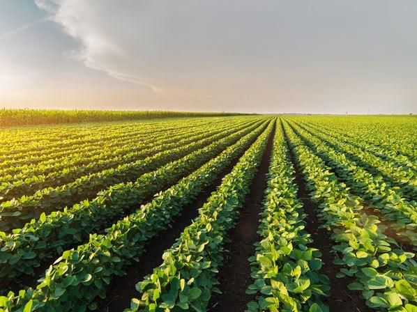 Công nghệ nhân giống thực vật mới đảm bảo an ninh lương thực