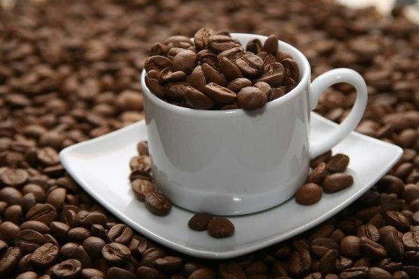 Nghiên cứu về loài nấm gây hại cây cà phê