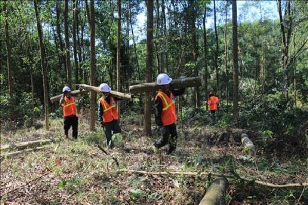 Vietnam needs more trees: experts