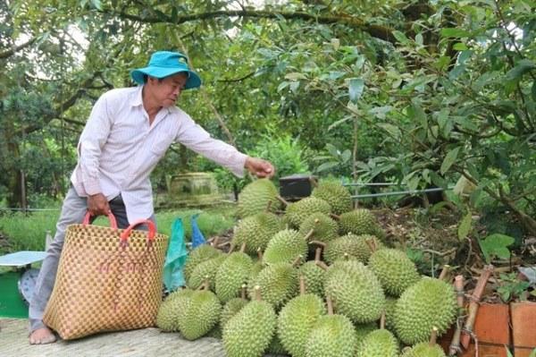 Mekong Delta fruit farmers enjoy bumper harvest, high prices