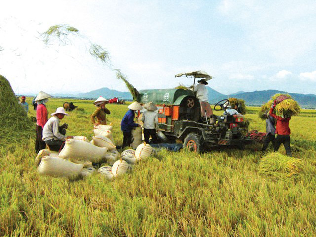 Wide door for Vietnamese rice export