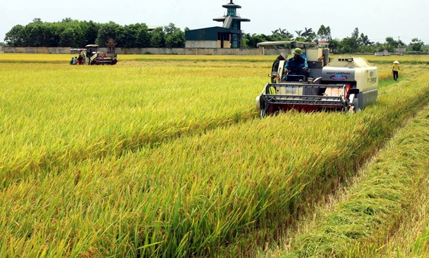 Rice export turnover up 10% in 2020