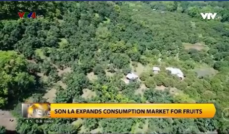 Son La expands consumption market for fruits
