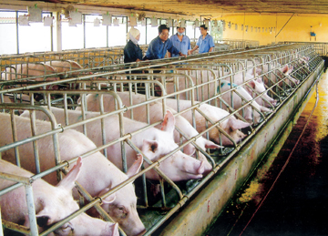 Pork import increased by over 300%